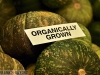 Organically Grown Kabocha Squash