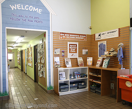 Lobby of the Burbank Animal Shelter after make-over by Warner Bros.     Photo by Ross A. Benson