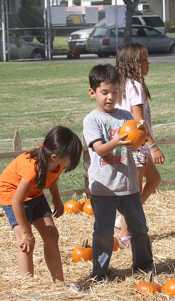2nd graders pick pumpkins