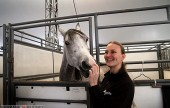 Cavalia-Horses-2