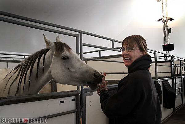 Burbank Vice Mayor Emily Gabel Luddy greets one of the horse upon their arrival on Thursday, (Photo by Ross A. Benson)