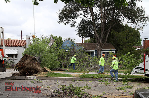 Burbank Forestry Crew remove this 60 year old Ash tree that fell on a house in the 3400 Blk. of Clark Street Sunday. (Photo by Ross A. Benson)