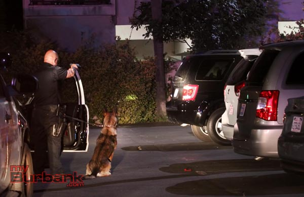 Burbank Police K9 Handler Joel Rodriguez and Kimo orders a suspect from a reported stolen SUV. (Photo by Ross A. Benson)