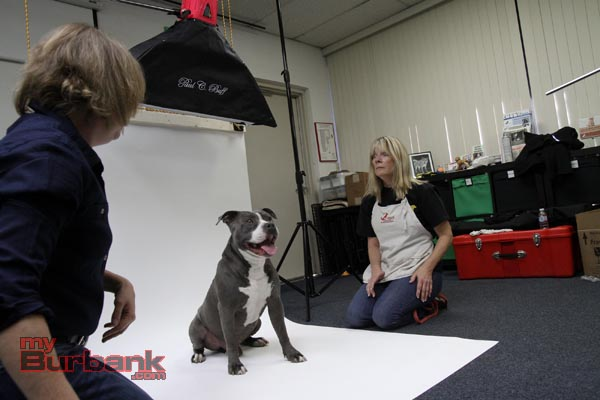 Deb Cobb ( Shelter Art Foundation) works with Maytag a Pit Bull Terrier, along with Lorry Izor. ( Photo by Ross A. Benson)