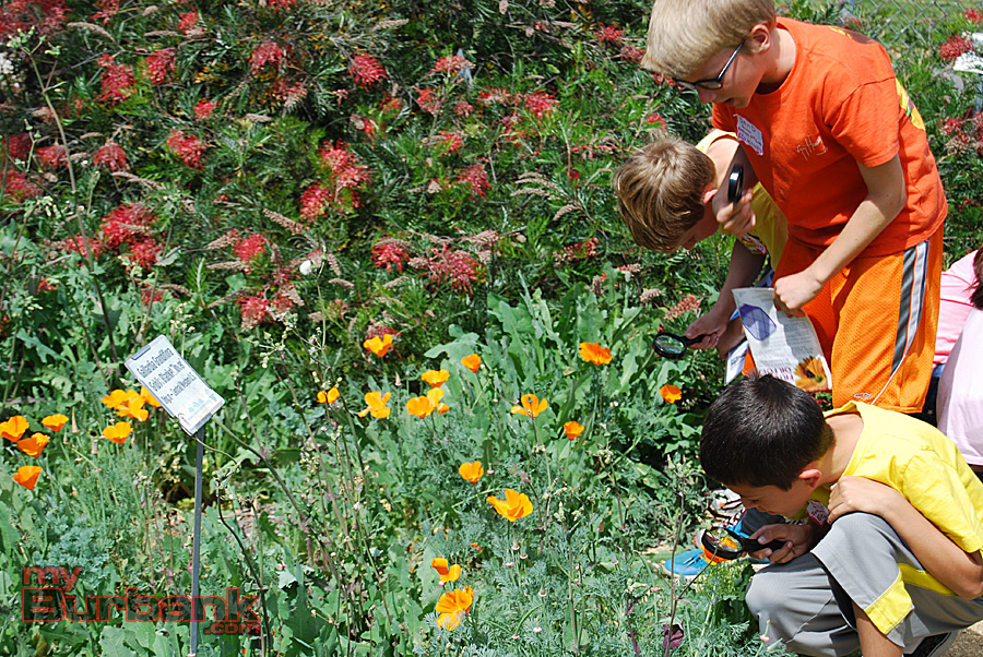 BUSD students closely inspect the Burbank Adult School garden during a full-day Environmental Awareness program. (Photo By Lisa Paredes)