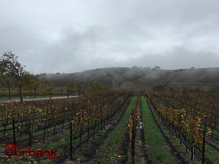 Foley vineyards. (Photo By Lisa Paredes)
