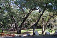 Coast Live Oaks Descanso Gardens