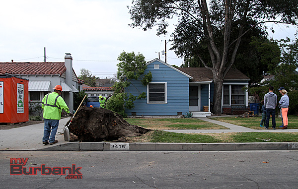 Two hours later the tree was all cut up and removed by Burbank's Forestry Division. (Photo by Ross A. Benson)