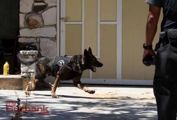 A K-9 on loan from the San Fernando Police searches house to house for suspects (Photo By Ross A. Benson)