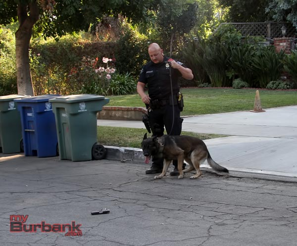Burbank Police K-9 Handler Joel Rodriguez and partner Kimo protect evidence of a weapon that was thrown during foot pursuit.(Photo by Ross A. Benson)