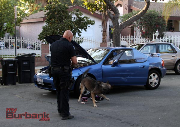 Burbank Police Dog Kimo finds evidence of drugs in the purse of one of the suspects. (Photo by Ross A. Benson)