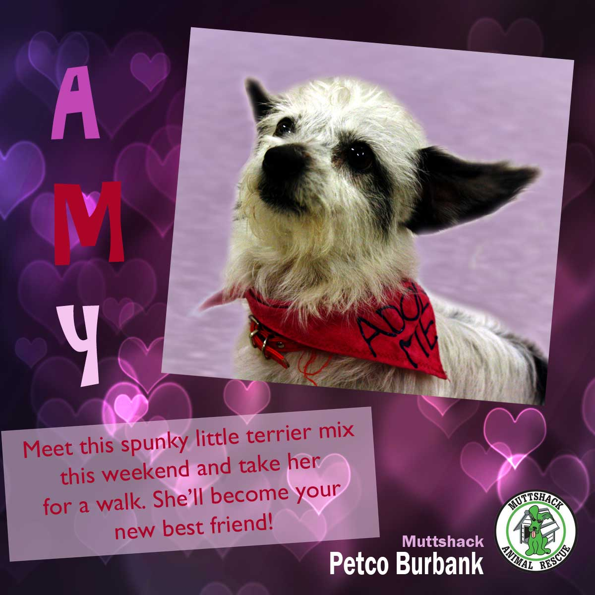 meet muttshack s rescue of the week it s amy myburbank com