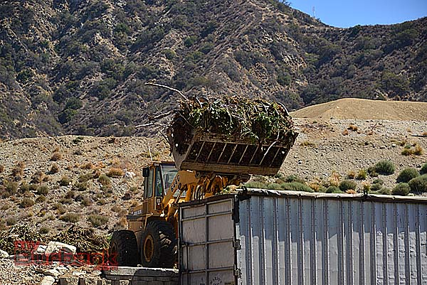 Green Waste on Way to Fontana