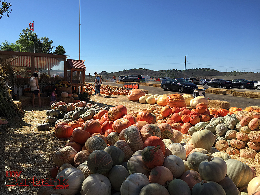 A huge selection of pumpkins, squash and gourds at the Underwood Family Farms stand. (Photo By Lisa Paredes)