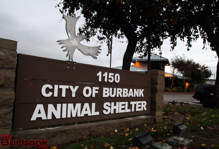 Burbank Animal Shelter Pic