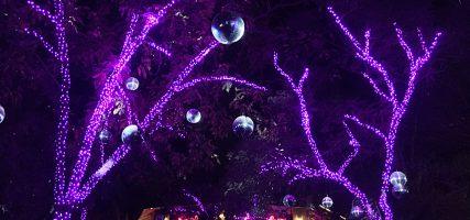 L.A. Zoo Lights